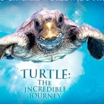turtle-the-incredible-journey