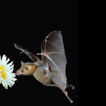 BatCity-header