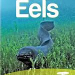 Eels-web
