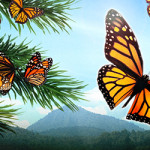 SeaChange-FlightButterflies-header
