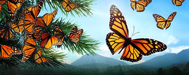 Flight of the Butterflies (film)