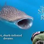 SharkRiddle630pix