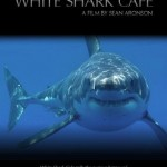whitesharkcafe
